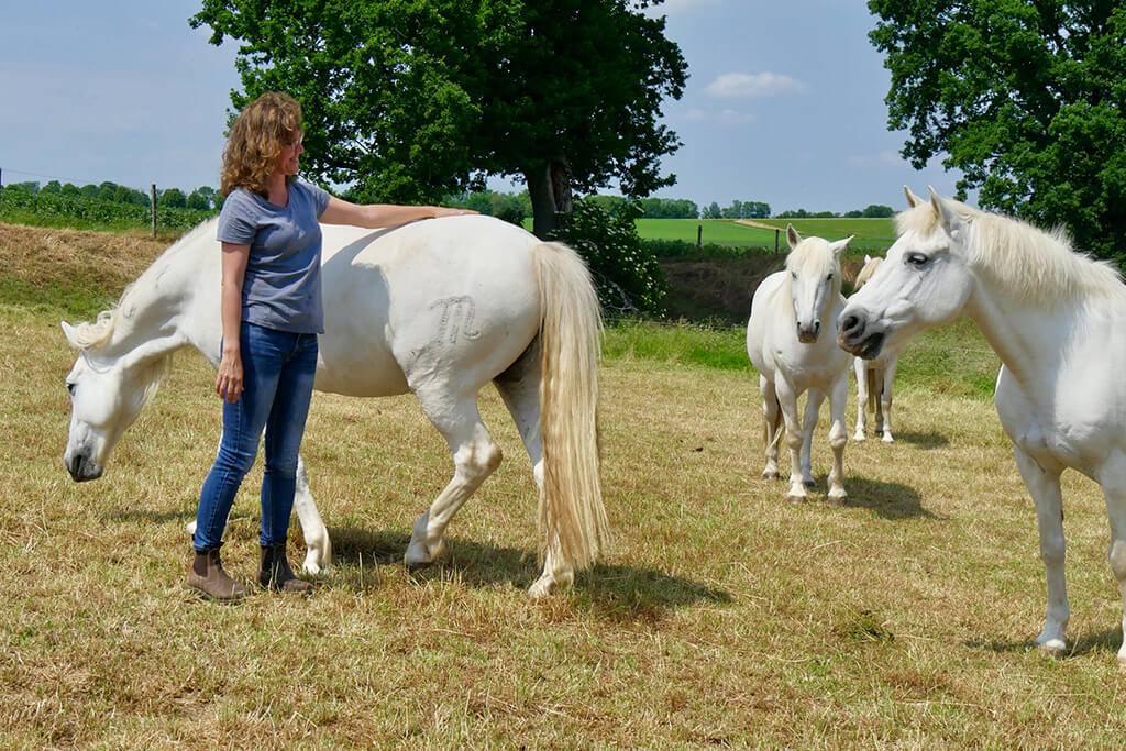 Space Clearing für die Gesundheit bei Pferd & Hund